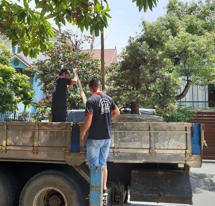 Vận chuyển chậu cây cảnh cần sử dụng xe cẩu tự hành